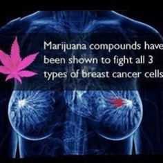 Marijuana compounds have been shown to fight all 3 types of breast cancer cells. Join the Movement with a payment plan here: http://cbdpl.us #CBD #Kway #hempVap ( #marijuana #cannabis ) http://www.pinterest.com/thathighguy