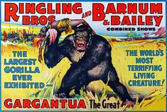 Ringling brothers and Barnum and Bailey Circus gorilla show metal sign