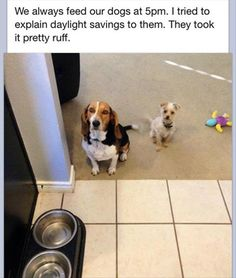 Funny Animal Pictures – 55 Pics