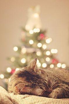 christmas happiness !