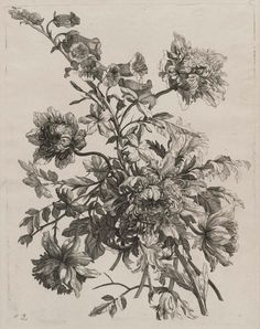 'Bouquet with Peonies' (circa 1640–86) by Jean Vauquer (1621–1686). Etching.  Image and text courtesy MFA Boston.