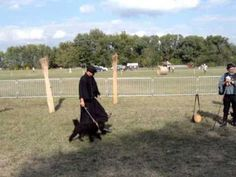 Magyar pásztorkutyák - Hungarian sheepdog breeds