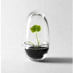 Grow - miniväxthus - Caroline Wetterling via Betonggruvan. Click on the image to see more!