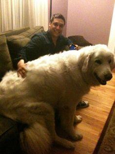 Si certains ont des préjugés sur les gros chiens en imaginant ces animaux comme des bêtes parfois féroces à éloigner des enfants, ils sont aussi et surtout les plus affectueu...