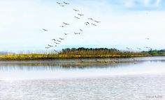 Tamar River Cruise Launceston Tasmania. Images captured and edited on iPhone 6s. Tamar Island Wetlands is an important wetland located about 10 minutes drive from Launceston in the North of Tasmania. It provides habitat for a variety of birds mammals reptiles frogs fish and invertebrates as well as being an important historic landmark in the early settlement of Launceston. It is part of the Tamar River Conservation Area which protects the Tamar Rivers remnant wetlands and estuarine…