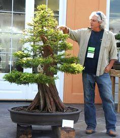 "Guy Guidry and his Bald Cypress, ""Twister"" ~ Lake Charles Bonsai Society Small Trees, Zen Garden, Ikebana, Bonsai Tree, Japanese Garden, Plants, Fairy Garden, Bald Cypress Tree, Beautiful Tree"