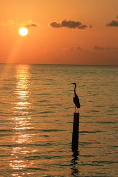 Vacation 2016 - Orange Beach, Gulf Shores, AL