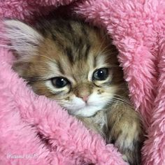 434. kitten in pink #Animals #architecture #cats #cute #animals #deer #dogs #kittens #lions #Photography #Pictures #puppies #squirrels #tigers #wolves #pets