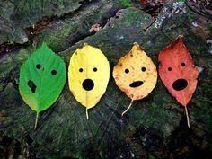 confused leaves...