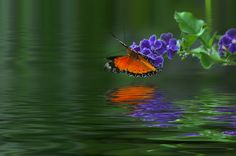 Butterfly by the bay by Khoo Boo Chuan, via 500px