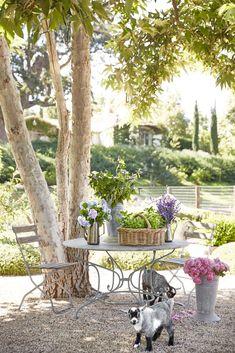 Best Of Gardening Tips Landscaping 70 Best Front Yard and Backyard Landscaping Ideas Amazing Gardens, Beautiful Gardens, Landscape Design, Garden Design, Garden Sitting Areas, Garden Fence Panels, Garden Path, Front Yard Landscaping, Landscaping Ideas