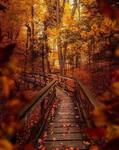 Superb Landscape & Nature Photography — Vaughan, Ontario - by Szabi Amazing Photography, Nature Photography, Photography Ideas, Planets Wallpaper, Dslr Background Images, Forest Path, Red Tree, Walk In The Woods, Wild Nature