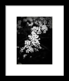 Blackthorn Blossom - Monochrome Framed Print by Jussi Laasonen. All framed prints are professionally printed, framed, assembled, and shipped within 3 - 4 business days and delivered ready-to-hang on your wall. Choose from multiple print sizes and hundreds of frame and mat options. Framed Artwork, Framed Prints, Canvas Prints, Wall Art, Landscape Photography, Flower Photography, Photography Ideas, Black And White Landscape, Flower Frame