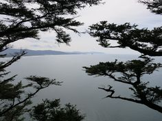 Cape Lookout: looking through the trees.