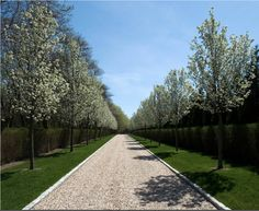 Driveway. Flowering pear trees Belgian Block edging
