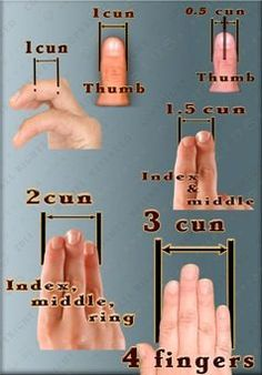 1-2-3_cun_measurement_www.acupoints-guide.com.jpg 238×341 pixels measurements we use