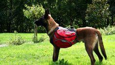 Revue du sac de bât Palisades pour randonner avec son chien