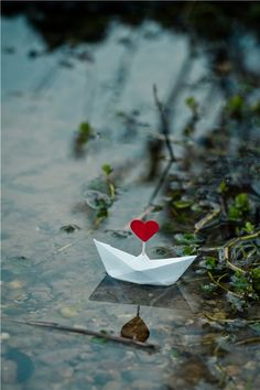 I love you My love : Fotoğraf Heart In Nature, Heart Art, Love Heart, Miniature Photography, Cute Photography, Lion Wallpaper, Flower Wallpaper, Smell Of Rain, Whatsapp Profile Picture