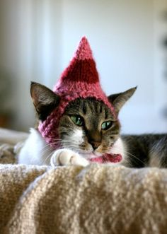 Elf-hat for your christmas cat!