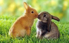 die 14 besten bilder von hasen cute bunny bunny rabbits und animal babies. Black Bedroom Furniture Sets. Home Design Ideas