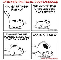 Interpretation How To Cat, San Diego Living, Cat Comics, Finding Joy, Happy People, Hilarious, Funny, Bored Panda, Comebacks