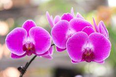 https://flic.kr/p/j136H8 | 2014 Orchid | 神代植物公園 温室