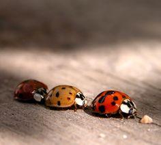 ...Ladybird Traffic Jam... - Random Images from The Heartland