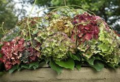 Deco Floral, Arte Floral, Hortensia Hydrangea, Colorful Flowers, Dried Flowers, Container Gardening, Good To Know, Flower Power, Flower Arrangements