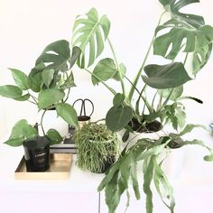 I love indoor plants, the green keeps the house feeling fresh, plus the added benefits of cleaning the air. Checkout this guide to 5 indoor plants I haven't killed yet some options for your place. White Houses, Indoor Plants, Greenery, Blog, Home, White Homes, Inside Plants, Ad Home, Blogging