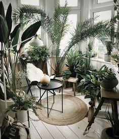 Plant throne inspo – Margot Hupert Art Filling your sitting room with plants is one of the most aesthetically pleasing interior design trends right now. Green is the new black for sure! Interior Design Trends, Interior Design Plants, Best Home Interior Design, Plant Design, Interior Decorating, Luxury Interior, Interior Design Kitchen, Decorating Tips, Design Design
