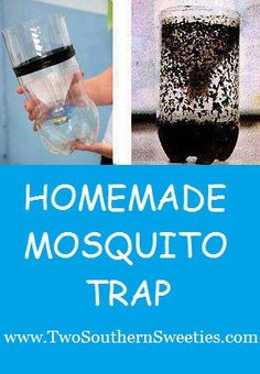 Homemade Mosquito Trap - Not only do mosquitoes suck our blood but they also can carry diseases like the Zika virus. Try this homemade trap! Wasp Trap Diy, Wasp Traps, Bug Trap, Best Mosquito Repellent, Mosquito Spray, Mosquito Repelling Plants, Mice Repellent, Insect Repellent, Mosquito Trap Homemade