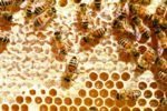 La jalea real que producen las abejas tiene un gran poder cicatrizante