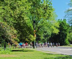"""Flow of cyclists"" Cyclist enthusiasts enjoying an afternoon ride through New York's Central Park. (unedited) https://www.facebook.com/pages/Moments-from-My-Travels-by-Danushi/912649745465268"