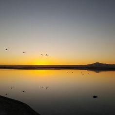 Hoje fizemos o Tour de Vinho e depois fomos até o Salar de Atacama. Lá tivemos a chance de ver muitos flamingos e um pôr do sol maravilhoso. Mais um passeio deslumbrante com @aylluatacama. Super recomendamos!