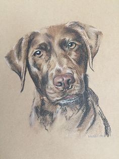 Poppy - March 2018 - Pastel & charcoal