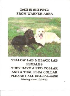 Please share They went missing in the storm Middlesex Co, Va Warner area have been seen in Urbanna Va 23175  Michelle Pearce  Brandy the yellow lab that is 13.The black lab is Pixie she is about 2. She is more skitish  my cell  804-854-4456  husbands cell  804-854-5493 our home number 758-9569. we live at 677 Farley Park Road. Just past the saw mill  Animal control in King & Queen have our info. so does Middlesex.  I love those girls they are my children and miss them terribly.