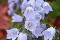 Pretty flowers in the back June 2018.   https://www.pinterest.co.uk/janiesingermode