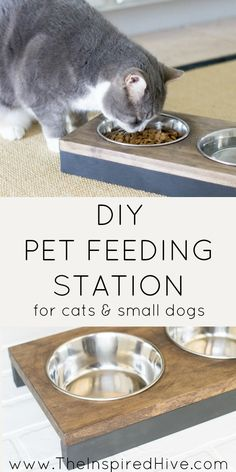 273 best cat feeding station images cat supplies dog cat cat condo rh pinterest com