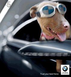 #BMW trust your best friend