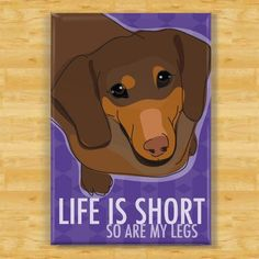 Dachshund Magnet - Life is Short So Are My Legs - Chocolate Dachshund Gifts Fridge Refrigerator Dog Magnets Black Dachshund, Dachshund Art, Dachshund Gifts, Funny Dachshund, Dog Gifts, Funny Dogs, Daschund, Dog Love, Puppy Love