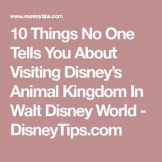 10 Things No One Tells You About Visiting Disney's Animal Kingdom In Walt Disney World - DisneyTips.com