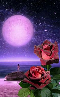 roses in the moonlight Beautiful Moon Images, Beautiful Love, Beautiful Flowers, Flower Pictures, Pretty Pictures, Moon Pictures, Fantasy Places, Fantasy Landscape, Moon Art