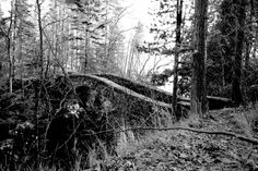 https://flic.kr/p/GWvZsY | Bridge to the Cemetery | An eerie black & white image of the bridge that connects the Glensheen Mansion to the neighboring cemetery.  Duluth, MN 2012
