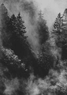 Black and White dark nature forest mist Woods fog foggy pines bleak