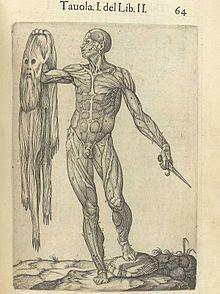 Vesalio fue el médico del emperador Carlos V y escribió uno de los más importantes tratados de Anatomía durante el  Renacimiento.