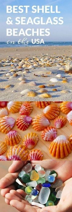 Beaches for Shells & Seaglass in the USA Best shell beaches and seaglass beaches in the USABest of the Best Best of the Best may refer to: Camping Places, Vacation Places, Places To Travel, Vacation Ideas, Camping Spots, Vacation Destinations, Vacation Spots, Vacation List, Holiday Destinations