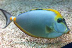07 Blue Reef Aquarium, Fish, Pets, Animals, Animales, Animaux, Pisces, Animal, Animais