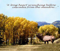 Pagosa Springs, Colorado untitled_copy_011-copy1
