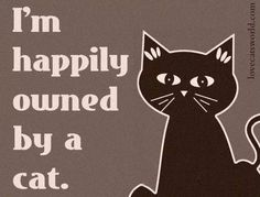 cat quotes Cat Memes Of The Day 30 Pics - Lovely Animals World I Love Cats, Crazy Cats, Cool Cats, Crazy Cat Lady Meme, Doja Cat, We Will Rock You, Cat Quotes, Cat Sayings, Lovers Quotes