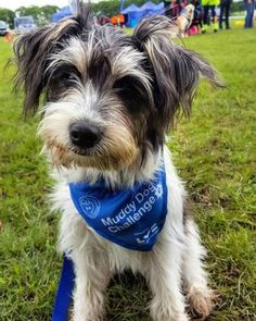 Dora and I participated in the Battersea Dogs & Cats Home 2017 Muddy Dog Challenge at Windsor Great Park. David James Gandy, May 2017